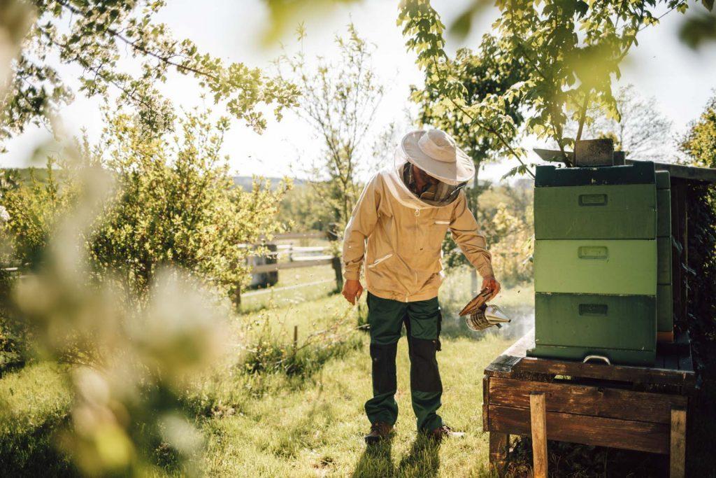 Imker an seinen Bienenstöcken